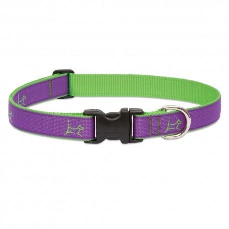 """Collar 1"""" Hampton Purple - Envío Gratuito"""