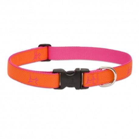 "Collar 1"" Sunset Orange - Envío Gratuito"