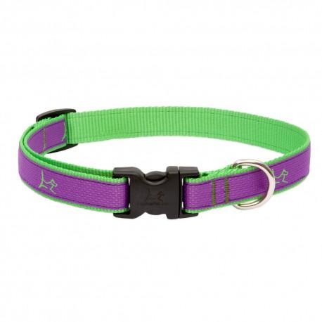 """Collar 3/4"""" Hampton Purple - Envío Gratuito"""