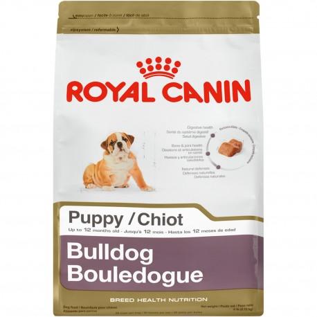 Bulldog Puppy - Envío Gratuito