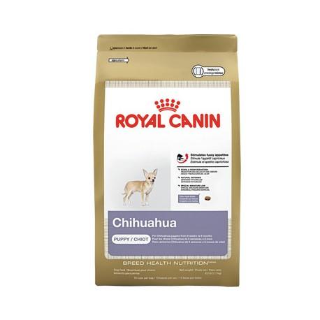 Chihuahua Puppy - Envío Gratuito