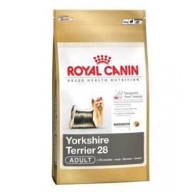 Yorkshire Terrier 28