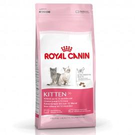 Kitten - Envío Gratuito